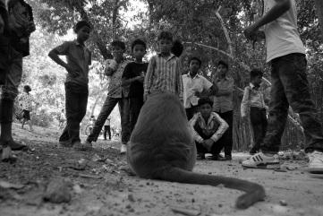 Angkor. Niños y mono. Mono y niños. Nadie tiene miedo.